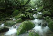 屋久島,白谷雲水峡,もののけの森,もののけ姫,苔,お花見