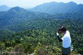 新緑燃ゆる、屋久島の山々,太忠岳,ガイドツアー,屋久島,4月