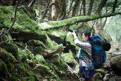 苔の森をカメラで撮影(8月の縄文杉1泊ガイドツアー)