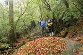 苔の上に映える紅葉(白谷雲水峡ガイドツアー)