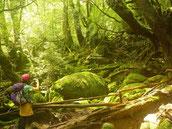 苔むす森で、一人旅を満喫!(白谷雲水峡ガイドツアー)