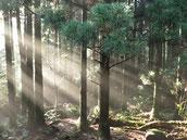 屋久島,縄文杉,森