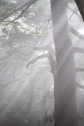 天空の森(縄文杉1泊2日ガイドツアー)