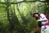 一人旅で、ガイドと一緒に、もののけ姫の森へ(白谷雲水峡・もののけ姫の森ガイドツアー)