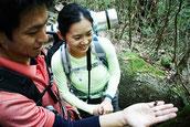 白谷雲水峡で、ヤクシマオニクワガタ発見(9月の縄文杉1泊ガイドツアー)