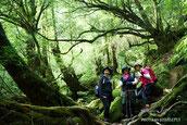 照葉樹,白谷雲水峡,リバーカヤック,屋久島,半日,ガイドツアー