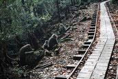 トロッコ道のヤクザル(縄文杉ガイドツアー)