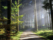 Waldbaden - forest bathing