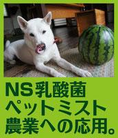 NS乳酸菌農法へ→