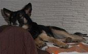 Ansaj fand hat nun auch ihr Sofa