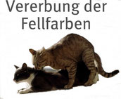 Klick führt zur Tabelle der Vererbung der Fellfarben bei Katzen, Klick führt zu http://www.katzengenetik.com/vererbung-black-blue-chocolate-lilac/, Bildquelle: fotolia.com