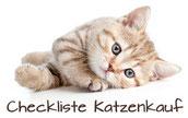 Checkliste Katzenkauf, Bildquelle:fotolia.com