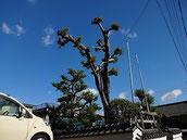 椋の大木が空に広がっています
