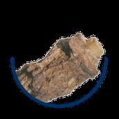 Bestandteil von metakaveron Sumbulus moschatus