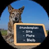 Anti-Giftköder-Training In München