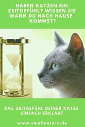 Zeitgefühl Katze