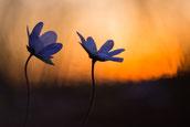 Sebastian Vogel, Flora, blumen, vogel-naturfoto