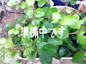 枕花アレンジ2000 洋花