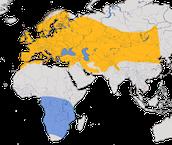 Karte zur Verbreitung des Mauerseglers (Apus apus)