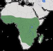 Karte zur Verbreitung des Bronzesultanshuhns (Porphyrio alleni),