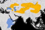 Karte zur Verbreitung des Nonnensteinschmätzers (Oenanthe pleschanka)