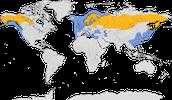 Karte zur Verbreitung der Sturmmöwe (Larus canus)