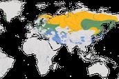 Karte zur Verbreitung des Seeadlers (Haliaeetus albicilla)