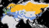 Karte zur Verbreitung der Kornweihe (Circus cyaneus)