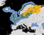 Karte zur Verbreitung der Silbermöwe (Larus argentatus)