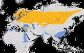 Karte zur Verbreitung des Grauen Kranichs (Grus grus)