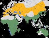 Karte zur Verbreitung des Mönchsgeiers (Aegypius monachus)
