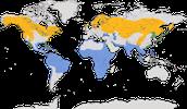 Karte zur Verbreitung des westlichen Fischadlers (Pandion haliaetus)