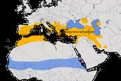 Karte zur Verbreitung des Mittelmeersteinschmätzers (Oenanthe melanoleuca)