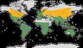 Karte zur Verbreitung der Rallen (Rallidae)
