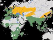 Karte zur Verbreitung des Teichhuhns (Gallinula chloropus)