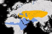 Karte zur Verbreitung des Isabellsteinschmätzers (Oenanthe isabellina)