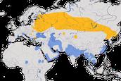 Karte zur Verbreitung des Schelladlers (Clanga clanga)