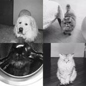 ペットシッター 横浜市中区、ペットシッターサービス、ペットシッター 横浜 猫 シッター 横浜中区 キャットシッター   猫シッター ペットシッター