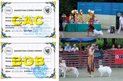 Japanese spitz; National; CAC; dog show; 2016; June; FCI; expert; judge; Antoan Hlebarov; photos; BOB; Champion;