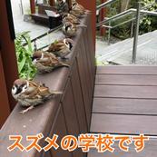 ◆スズメの休憩◆