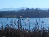 Wintermorgen am Opfinger Baggersee