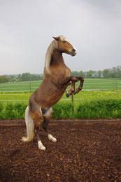 Liebe und Freundschaft zwischen Mensch und Pferd / Liebeserklärung an ein Pferd