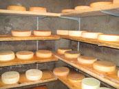 Selbstgemachter Käse im Käse-Reiferaum auf der KäseAlm im Salzburger Land.