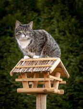 Katze auf dem Vogelhaus, Foto: Radka Schöne  / pixelio.de