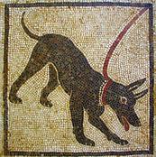 POMPEI (Napoli - Italia) - Ritrovamento di un mosaico che ritrae un cane