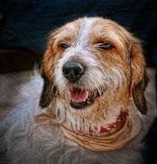 Anxiété de séparation chez le chien ou hyper attachement ?