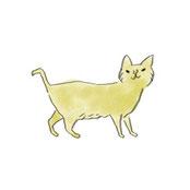 黄色い猫画像