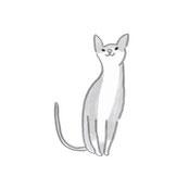 灰色の猫画像
