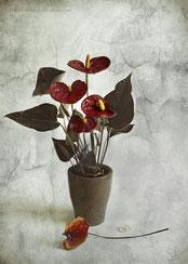 Cœur sang fleur rouge still-life flower