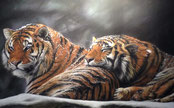Highly Commended - Ann Johnston Gill's 'Snow Tigers'
